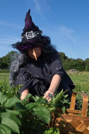 Heksen plukker urter